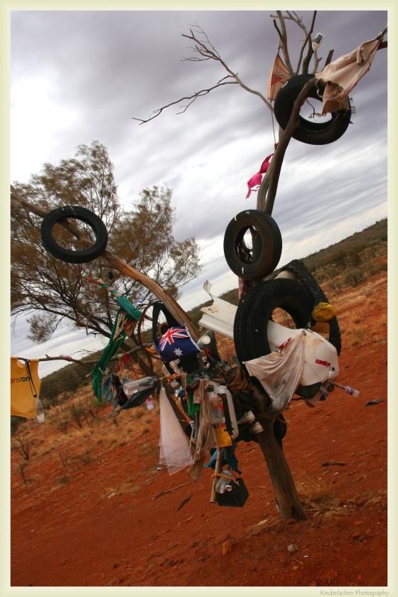 australia outback tree